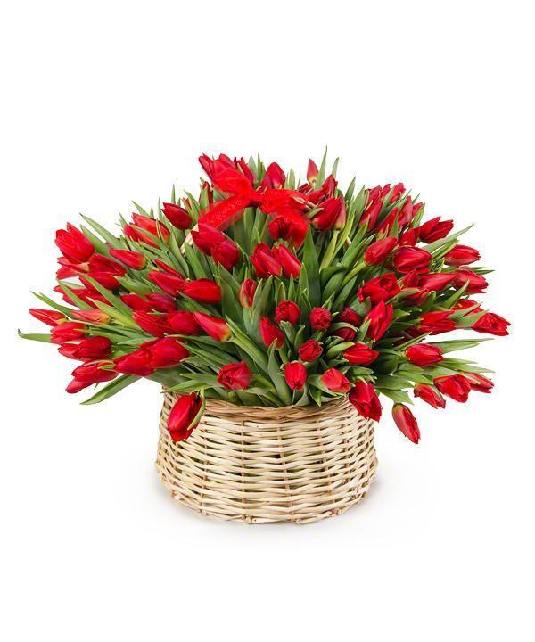 корзина 150 красных тюльпанов