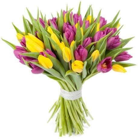35 tulip