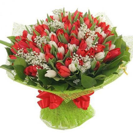 101 бело-красный тюльпанн