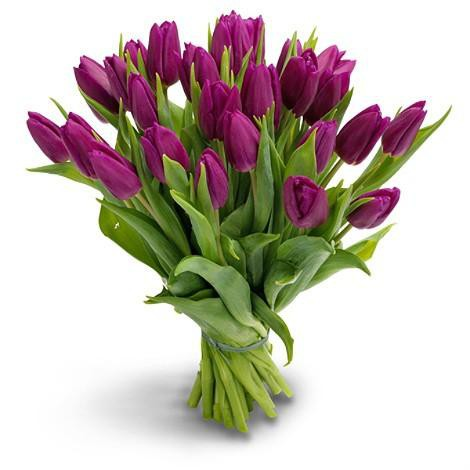 25 fiol tulip