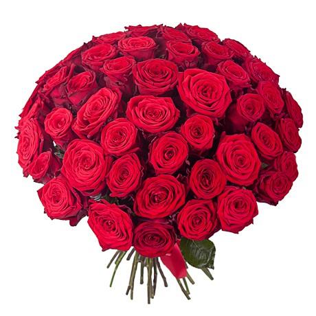 51 roza red naomi dop