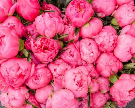 depositphotos_25497771-stock-photo-bouquet-of-blooming-peonies