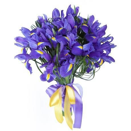 31 iris